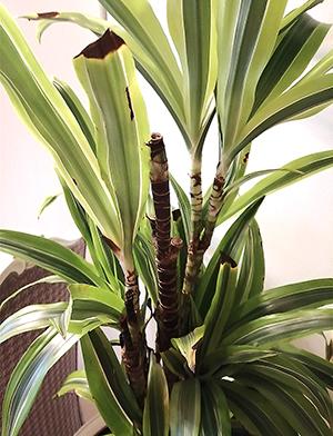 лечение цветов растений